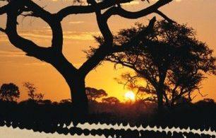 Afrikanische Nächte
