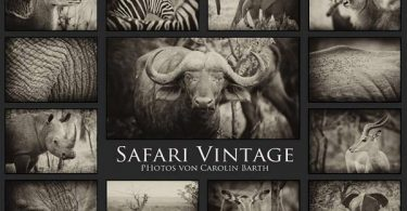 Safari Vintage 2022